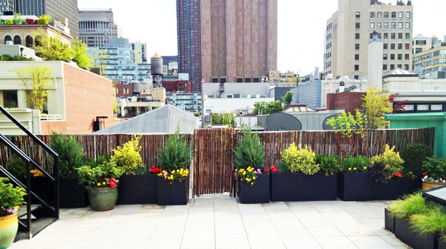 plants suitable for roof terrace design