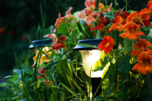 Close-up view of little lanterns in a flower garden
