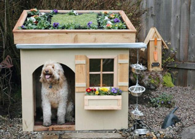 dog house with garden roof low budget interior design rh oobimaihta elitescloset store