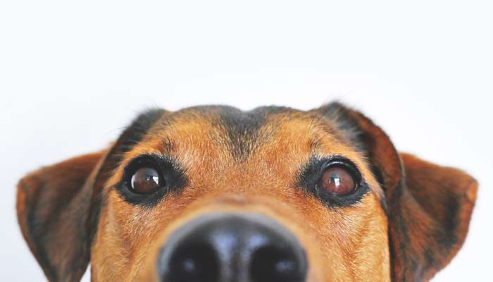dogs in rental property