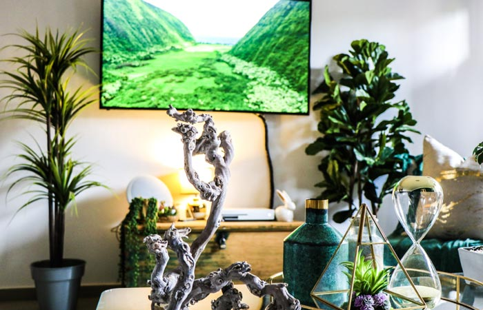 livingroom plants