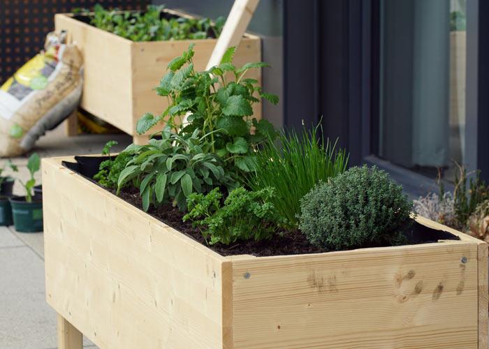 raised beds in garden